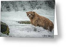 Grizzly Stare Greeting Card