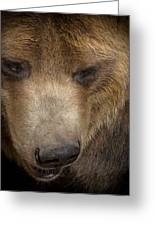 Grizzly Upclose Greeting Card