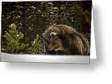 Grizzly's Courting Greeting Card