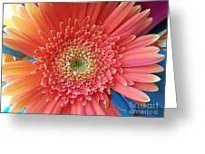 Groovy Gorgeous Gerber Greeting Card