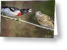 Grosbeak Gossip Greeting Card