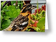 Grosbeak Profile Greeting Card