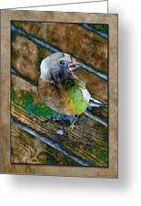 Grosbeak Greeting Card