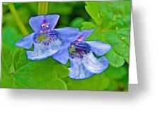 Ground Ivy Near Alamo-michigan Greeting Card