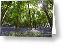 Ground Level Bluebells Greeting Card