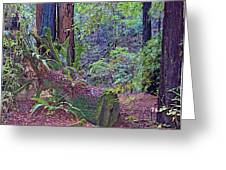 Ground Level Landscape In Armstrong Redwoods State Preserve Near Guerneville-ca Greeting Card