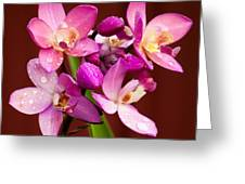 Ground Orchid Greeting Card