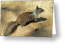 Ground Squirrel Greeting Card