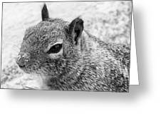 Ground Squirrel With Sandy Nose Greeting Card