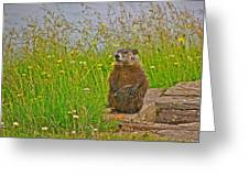 Groundhog At Point Amour In Labrador Greeting Card