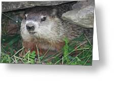 Groundhog Hiding In His Cave Greeting Card