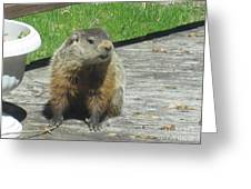Groundhog Holding A Stick Greeting Card