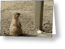 Groundhog With Shadow Greeting Card