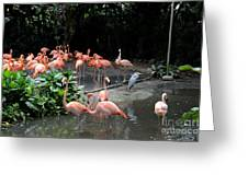 Group Of Flamingos And Lone Heron In Water Greeting Card