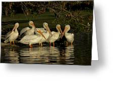 Group Of White Pelicans Greeting Card