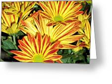 Grouping Of Gerbera Greeting Card