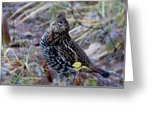 Grouse Greeting Card