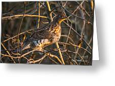 Grouse In A Tree Greeting Card