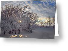 Grove And Road - Winter Greeting Card
