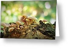 Grow Greeting Card by Achmad Bachtiar