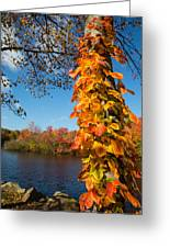 Growing Colors Greeting Card