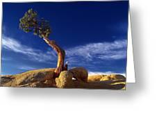 Growing In Rock 2 Greeting Card