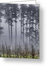 Growing In The Fog Greeting Card