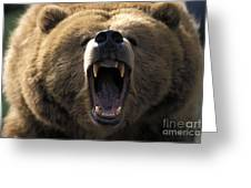 Growling Grizzly Bear Greeting Card by Mark Newman