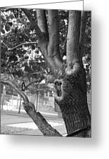 Growth On The Survivor Tree In Black And White Greeting Card