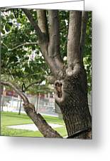 Growth On The Survivor Tree Greeting Card