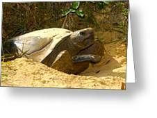 Florida Gopher Tortoise And Home Greeting Card