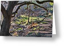 Guadalupe State Park Greeting Card
