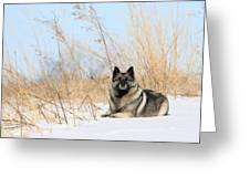 Guardian Of The Arctic Land Greeting Card
