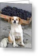 Guardian Of The Grapes Greeting Card