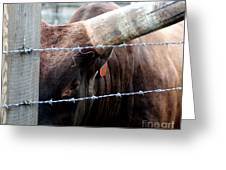 Guarding The Fence V2 Greeting Card