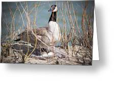 Guarding The Nest Greeting Card