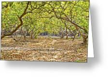 Guava Garden In Autumn Greeting Card