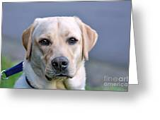 Guide Dog In Training Greeting Card