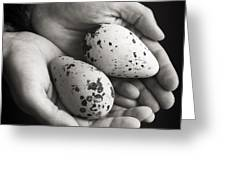 Guillemot Eggs Black And White Greeting Card