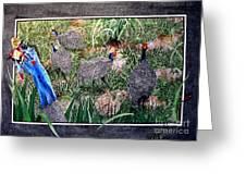 Guinea Fowl In Guinea Grass Greeting Card