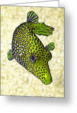 Guinea Fowl Puffer Fish In Green Greeting Card