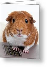 Guinea Pig Talent Greeting Card