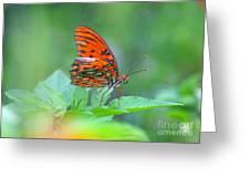 Gulf Fritillary 2 Greeting Card