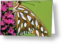Gulf Fritillary Butterfly Agraulis Greeting Card