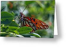 Gulf Fritillary Butterfly Close Up Greeting Card
