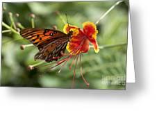Gulf Fritillary Photo Greeting Card
