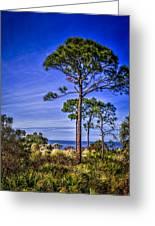 Gulf Pines Greeting Card