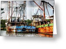 Gulf Star At Rest Greeting Card