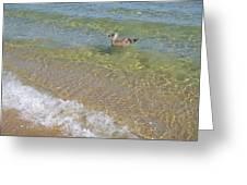 Gull Floating Greeting Card