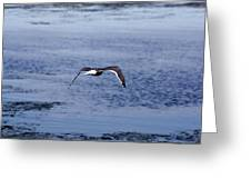 Gull Flying Over Water Greeting Card